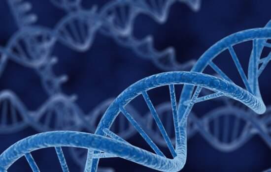 """A bactéria Escherichia coli, que habita o intestino humano, e ganhou um novo """"design"""" genético."""
