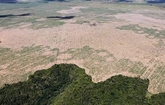 Deamatamento na Amaônia bate novo redord