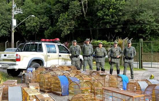 Guarda de São Bernardo salva aves de maus tratos em ação de combate a crimes ambientais