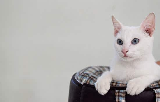 CCZ Diadema alerta para abandono de animais