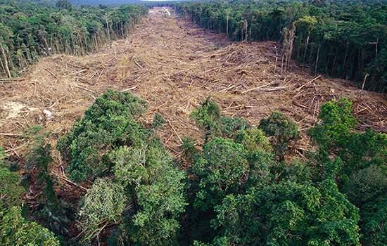 Em junho, o desmatamento na Aamazônia foi o equivalente à cidade de Belém