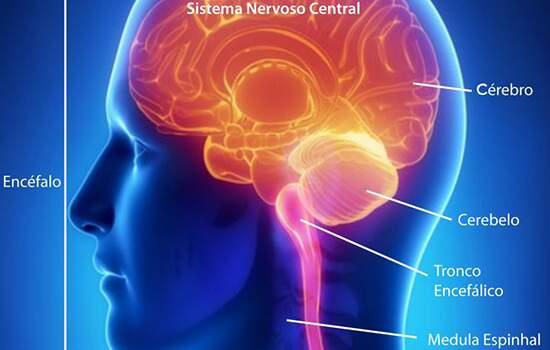 A Esclerose Múltipla: NÃO é uma doença mental.NÃO é contagiosa.NÃO é suscetível de prevenção.NÃO tem cura e seu tratamento consiste em atenuar os afeitos e desacelerar a progressão da doença.
