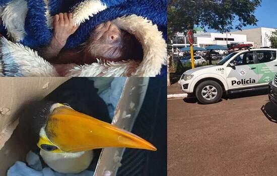 O filhote de tucano estava escondido numa caixa de papelão com furos, enquanto o macaquinho foi achado enrolado num cobertor.