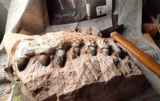 Pedaço de mandíbula de crocodilo incrustado em rocha, um dos achados importantes
