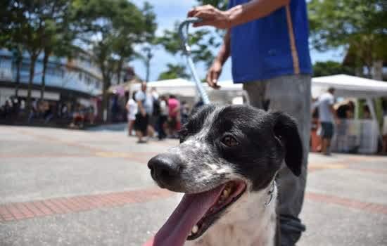 O CMDPA apoiará o município na elaboração e fiscalização de políticas públicas referentes à proteção animal