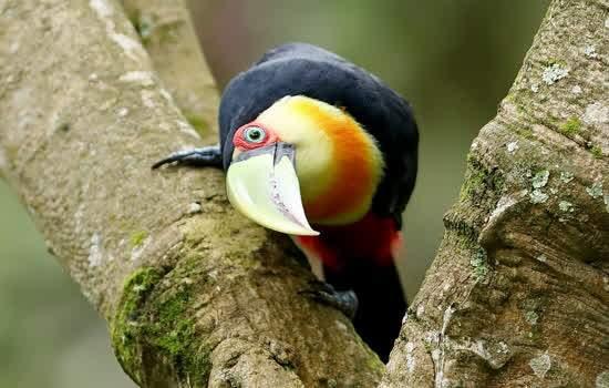Foram identificadas mais de 200 espécies de fauna e flora, além de cinco nascentes no local