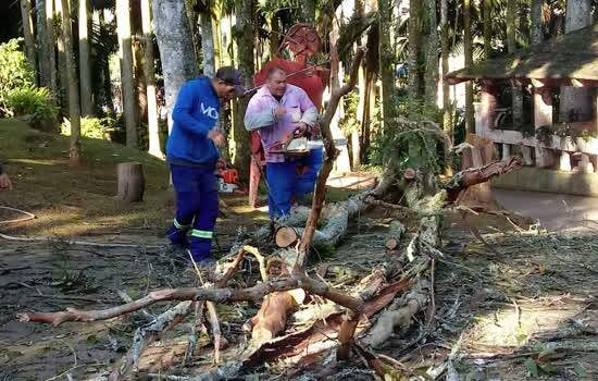 Árvore morta retirada no Parque Pérola da Serra