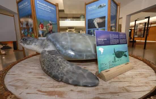 Mostra, com réplica de cinco espécies de tartaruga, pode ser conferida até 29 de setembro; público pode visitar também a tartaruga marinha Valente, que vive no tanque oceânico da Escola - Continue lendo