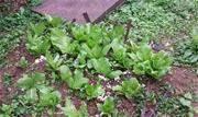 Projeto visa sensibilizar a comunidade escolar sobre a importância da horta para as questões alimentares - Continue lendo