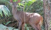 Presença do animal indica que a região é bem preservada e abriga grande biodiversidade de espécies de flora e fauna - Continue lendo