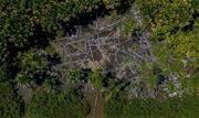 Apesar da redução de registros em 28% em julho, na comparação com julho de 2019, os alertas de desmatamento da Amazônia nos últimos 12 meses devem superar em 34% em relação ao ano passado. - Continue lendo