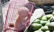 Pesquisadora do UNICURITIBA vence prêmio de bioética com artigo sobre comércio ilegal de espécies silvestres e suas consequências sociais, políticas e econômicas - Continue lendo
