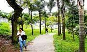 Atividade tem como abordagem os benefícios das árvores para a saúde humana e ambiental, além de iniciativas desenvolvidas pela Prefeitura de Santo André - Continue lendo