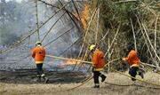 Um incêndio atingiu o Parque Ecológico de Águas Claras, na região administrativa de mesmo nome, a cerca de 20 quilômetros da Esplanada dos Ministérios, em Brasília - Continue lendo