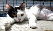 Dos 36 animais disponibilizados, 18 cachorros e 12 felinos foram adotados - Continue lendo