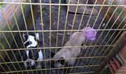 A ação teve elogios do prefeito Atila Jacomussi e mais de dez cachorros se recuperam na UPAA - Continue lendo