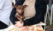 Prefeitura oferece, desde 2017, procedimentos cirúrgicos para animais da cidade. Mais de dois mil cães e gatos já foram contemplados - Continue lendo