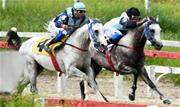 Já foram realizados duas corridas e dia 27 de fevereiro acontece o Prêmio IFHAR, com nove animais inscritos, enfrene nos 1200 metros na grama, com bolsa de R$ 10 mil - Continue lendo