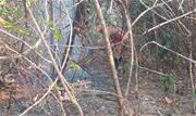 Queimadas atingiram área total de 28 mil hectares - Continue lendo