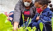 Atividade integra projeto pedagógico que estimula hábitos saudáveis, apresenta a origem dos alimentos e promove o respeito à natureza  - Continue lendo
