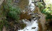 Contribuintes do rio Tamanduateí, os córregos Bocaina, Água Espraiada, Taboão e Itrapõa apresentam melhora na qualidade da água, livres da poluição provocada por esgoto - Continue lendo