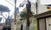 Morador contratou ilegalmente empresa por R$ 4.800 para retirar ipê-roxo na rua Visconde de Mauá; prática configura crime ambiental - Continue lendo