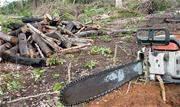 Em pouco mais de 3 meses (1/8 a 13/11), o corte seletivo de madeira da Amazônia, quando só algumas árvores são tiradas com o objetivo de exploração de madeira, afetou uma área de 2.133 km2 - Continue lendo
