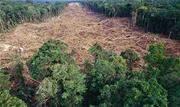 A Coalizão Brasil Clima, Florestas e Agricultura enviou para o Governo Federal um conjunto de seis propostas relacionadas ao tema - Continue lendo