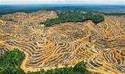 Em meio a uma queda de braço com o Instituto Nacional de Pesquisas Espaciais (Inpe), Bolsonaro afirmou hoje, 31, que o governo pretende divulgar dados reais sobre o desmatamento no País - Continue lendo