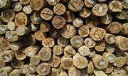 O presidente do Ibama atendeu a pedidos de associações de madeireiras e dispensou a necessidade de autorização específica para exportação, conforme instrução normativa em vigor desde 2011 - Continue lendo