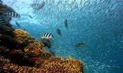 Fortalecer a cultura oceânica e promover inovações para o desenvolvimento sustentável são alguns dos objetivos da Década do Oceano (2021-2030) - Continue lendo