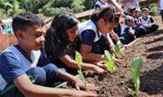 Programa de horticultura implantado pela Secretaria de Educação acontece desde o ano passado - Continue lendo