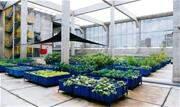 A iniciativa visa a produzir alimentos orgânicos para os funcionários, além de reduzir a pegada de carbono da empresa. - Continue lendo