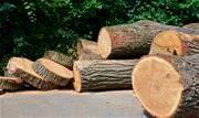 """Mais de 120 mil toras de madeiras teriam sido """"regularizados"""" mediante fraude. A quantidade apreendida seria o equivalente para carregar cerca de 8 mil caminhões  - Continue lendo"""