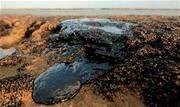 """A força-tarefa do governo federal responsável por acompanhar o derramamento de óleo no litoral brasileiro considera """"baixa"""" a probabilidade de resíduos de óleo alcançarem São Paulo - Continue lendo"""