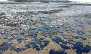 Vazamento de óleo que sujou as praias nordestinas desde o início de setembro e já atingiram 139 locais em 63 municípios de nove Estados - Continue lendo