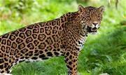 Promovida pelo Projeto Bichos do Pantanal campanha arrecada para salvar animais que sobreviveram ao fogo - Continue lendo
