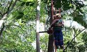 Maior responsável por uma invasão biológica no Parque Trianon, na Avenida Paulista, SP, a seafórtia, também conhecida como palmeira-australiana ou palmeira-real, será removida do local  - Continue lendo