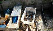 Apesar de fiscalização reforçada, pescadores não respeitam período de reprodução dos peixes colocando em risco fauna aquática - Continue lendo