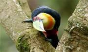 Levantamento de biodiversidade da Reserva foi feito pela Fundação Espaço ECO nos 30 hectares de floresta na fábrica localizada em São Bernardo do Campo - Continue lendo