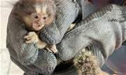 O primata estava refugiado dentro de uma residência na área central da cidade - Continue lendo