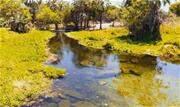 Projetos de reflorestamento ajudam a aumentar volume dos rios - Continue lendo