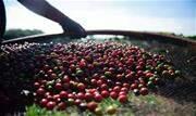 Para o café solúvel, os embarques aéreos cresceram 150,6% entre janeiro e agosto de 2020 e o mesmo período de 2021 - embora o volume exportado por aviões também não chegue a 1% do total - Continue lendo
